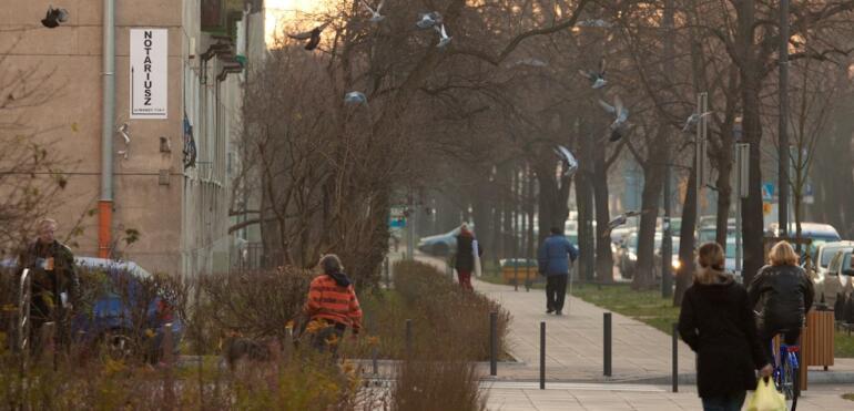 Ptaki żyjące w miastach - czy je znasz?