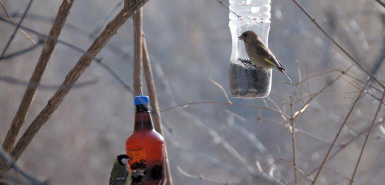 Jubileuszowe Zimowe Ptakoliczenie w parku Skaryszewskim
