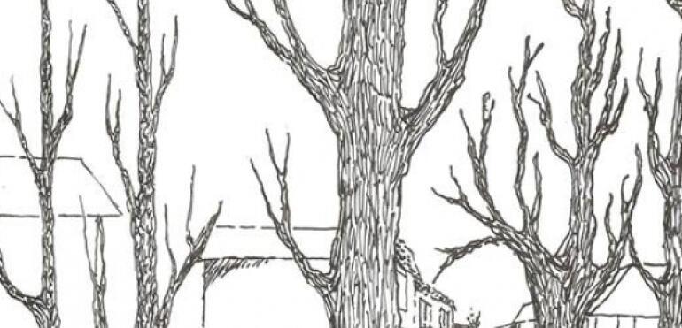 Wydział Ochrony Środowisk zaprasza na spotkanie edukacyjne dotyczące ratowania drzew Saskiej Kępy